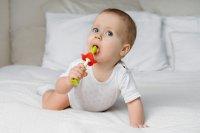 Щетки детские зубные массажер прорезыватель для десен FLOWER от ROXY-KIDS, 2 шт, зеленый/красный